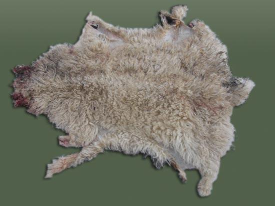 Pieles y lanas hermanos mart n del val - Pieles de oveja ...